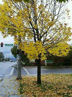 The Beauty of Rain Falling In Love, Sidewalk, Rain, Country Roads, Autumn, Nature, Plants, Studios, Cherry