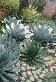 Our Best Desert Landscaping Tips – front yard landscaping simple Succulent Landscaping, Tropical Landscaping, Landscaping Plants, Front Yard Landscaping, Succulents Garden, Dessert Landscaping, Landscaping Design, Desert Landscaping Backyard, Residential Landscaping