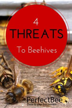 The Main Threats To Bees Super important for new beekeepers and experienced beekeepers alike: what are the 4 main hive threats? This is an awesome, well-researched article! Bee Hive Plans, Beekeeping For Beginners, Bee Supplies, Raising Bees, Bee Do, Bee Farm, Backyard Beekeeping, Bee Friendly, Busy Bee