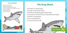 The Grey Shark Factual Description Writing Sample  - Literacy