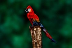 It took Johannes Stoetter weeks of painstaking planning to transform this model's body into the image of a parrot.