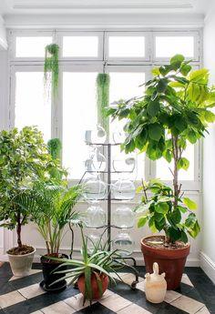 Aménagez un coin pour vos plantes près de la fenêtre, elles pourront profiter du soleil autant que vous