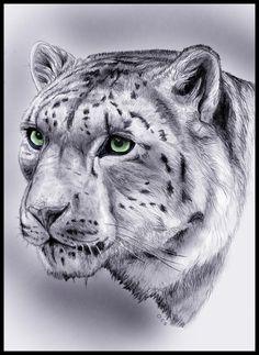 snow-leopard-colour-for-blog.jpg (647×887)