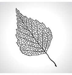 Black macro leaf of birch tree isolated vector image on VectorStock Birch Tree Tattoos, Bonsai Tree Tattoos, Leaf Tattoos, Tattoo Tree, Roots Drawing, Leaf Drawing, Leaf Silhouette, Silhouette Vector, Unique Cross Tattoos