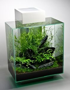 A small plants only fish tank