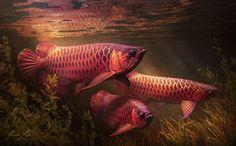 Https Www Artstation Com Artwork 4xv9q ปลาสวยงาม ปลาก ด ส ตว