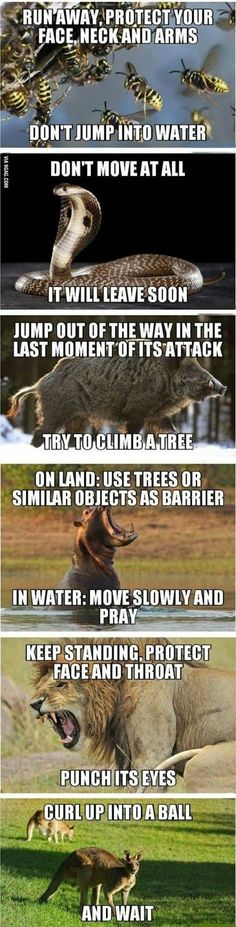 How To Defend Yourself From Wild Animals!
