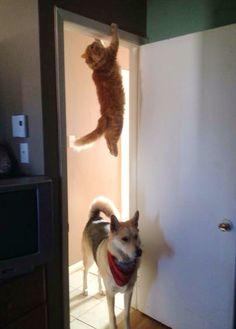funny-animal-hide-seek-1122-orig.jpg