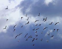 Din Delta Dunării: Ziua Mondială a Păsărilor Migratoare