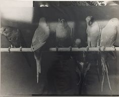 "Daido Moriyama, 'From the series ""Japan, a Photo Theater Ⅱ""', 1978"
