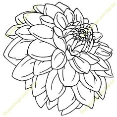 Line drawing dahlia | Found on bestclipartblog.com