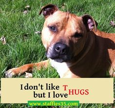 Staffies just love to hug  http://staffies35.com