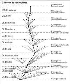 """La Ortogénesis, evolución ortogenética, evolución progresiva o autogénesis, es una hipótesis biológica según la cual la vida tiene una tendencia innata a evolucionar de un modo unilineal debido a alguna """"fuerza directriz"""", ya sea interna o externa. La hipótesis tiene bases filosóficas de esencialismo, finalismo, y de teología. George Gaylord Simpson en 1953 en un ataque a la ortogenesia llamó este mecanismo """"la misteriosa fuerza interna"""""""
