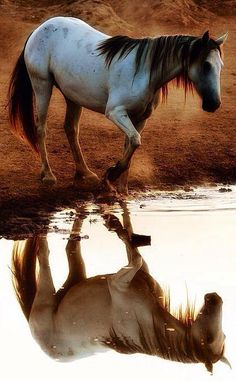 Again, we are together with beautiful horse pictures. Our visitors are interested to horse photographs. That's why we chose great horse pictures for you.
