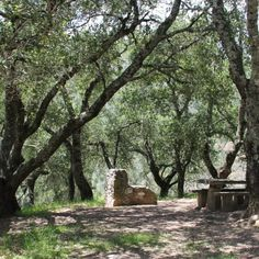 Live Oak Campground - Mount Diablo State Park