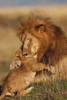 Never Forget Cecil the Lion ♥
