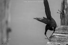 #mexico #travel #travelphotography #travelling #yucatan #tulum #quintanaroo #akumal #caribbean #photography #travelblogger #caribbean #animals #animal #naturephotography #naturelovers #naturepics #blackandwhite