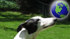 Petition · World Leaders: Greyhounds are racing to their deaths worldwide · Change.org