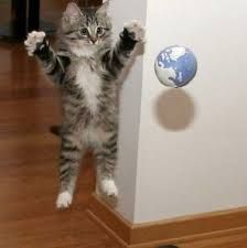 空飛ぶネコ