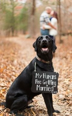 """Engagement photos + Animal friendly wedding photos - """"My humans are getting married"""" dog sign {Kylene Ann Photography} # Dogs in weddings Kylene Ann Photography - Photography - Clarksville, TN - WeddingWire Dog Engagement Photos, Engagement Announcement Photos, Engagement Couple, Engagement Photography, Wedding Engagement, Wedding Photography, Engagement Quotes, Engagement Signs, Country Engagement"""