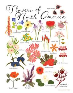 Flowers of North America Print Small Adventure is devoted to creating beautifully illustrated artwork that explores nature, traveling and exciting stories. Illustrated in gouache by Keiko Brodeur. Fea