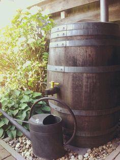 #Regenton #gieter #hortensia Dit is wat bij ons niet mocht ontbreken in de tuin