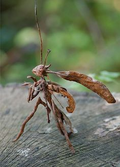 Stick mantid - makes you think, what other creatures live with fairies and elfs? Ore aliens