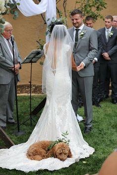 Maggie Sottero Wedding Dresses - Maggie Bride: Ashley Gaynor in WYATT Perfect Wedding, Dream Wedding, Wedding Day, Wedding Ceremony, Dog Wedding Dress, Dog Wedding Collar, Dogs At Wedding, Rustic Wedding, Dog Wedding Attire