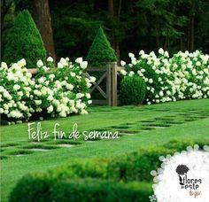 Regala flores, regala Flores del Este #viernes #friday #garden #design #floresdelestetogo #floresdeleste
