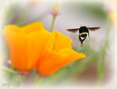 The Flower Fields 4.28.13 3   Flickr - Photo Sharing!