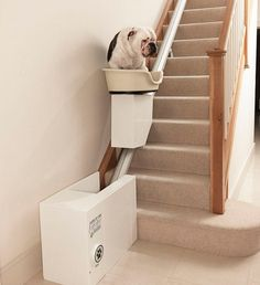 Stair elevator for fat dogs. she struggles up the stairs :( Stair Elevator, Overweight Dog, Disabled Dog, Funny Animals, Cute Animals, Stair Lift, Fat Dogs, Animal Gato, Funny Photos