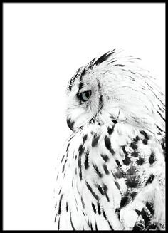 Poster met foto van een witte uil