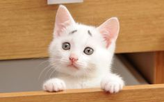 Cute and innocent eight-week-old Moggie