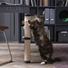 With this cat scratching mat you quickly and easily transform an ordinary table leg into a scratching tree where your cat can both sharpen their claws and stretch. You easily attach the cat scratching mat using the sewn-in straps. Sisal, Cat Furniture, Upholstered Furniture, Jute, Kallax Shelving Unit, Portable Tent, Agave Plant, Like A Cat, Windows