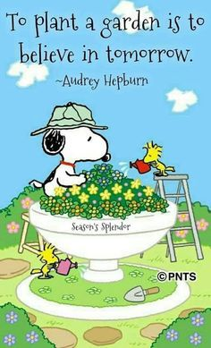 Snoopy and Woodstock Snoopy Frases, Snoopy Quotes, Charlie Brown Quotes, Charlie Brown And Snoopy, Snoopy Love, Snoopy And Woodstock, Happy Snoopy, Cuadros Star Wars, Peanuts Quotes