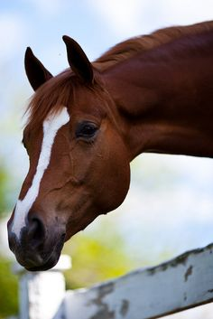 In the Country / beautiful horse in the pasture