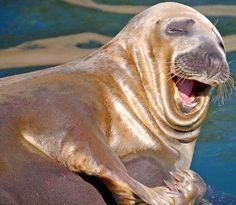 animals smile - Buscar con Google