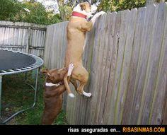 Perros trabajando en equipo.