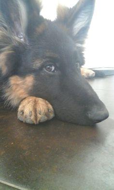 My Dog Rufus❤