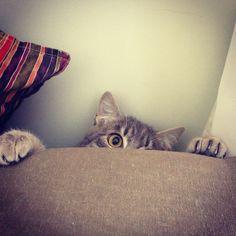 Let´s play hide&seek?