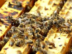 Great resources page for beekeeping info for beginners.