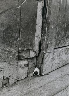I see you....their noses are like fingerprints. Ireland, 1977 - 1987. Photo by © Jill Freedman.