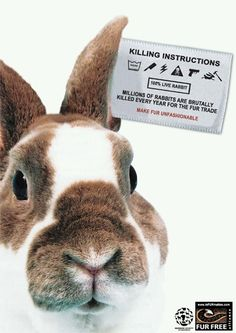 Pet owners: #Support them! Rabbits are intelligent, curious, willful, funny, affectionate, greedy and cute!