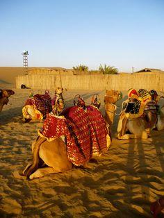 Camel Riding on Dubai Safari #camelsafaridubai #arabiannightsafari visit http://arabiannightsafari.com/Camel-Desert-Safari-Dubai.html for more details