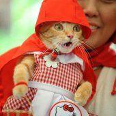 Gato aterrado al comprobar en sus carnes gatunas de qué puede llegar a ser capaz su sonriente y angelical dueña.