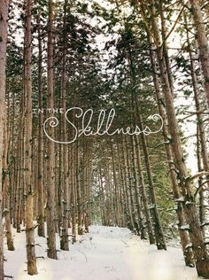 Snowshoeing in Northern Michigan in Traverse City with Megan Gilger of The Fresh Exchange Adventure Is Out There, Adventure Time, Nature Quotes Adventure, Into The West, Winter's Tale, Winter Beauty, Winter Wonder, Before Us, Go Outside