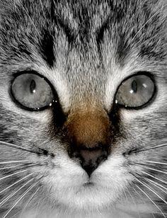 Mila is growing. Cat. Kitten