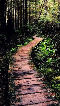 The path to Cape alava  source Flickr.com