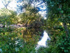 Boa tarde :D O verde luxuriante das margens do rio Vez em Arcos de. Onde apesar de todos os fogos ainda há muito verde para desfrutar