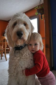 Mason and Bee - Goldendoodle